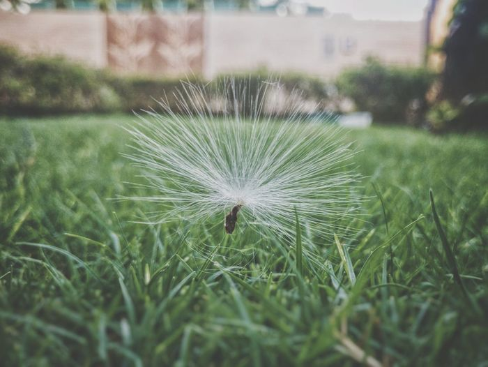 Nature Growth Outdoors Green Color Close-up Day Agriculture Beauty In Nature One Animal Grass Fragility No People Flower Freshness Animal Themes Wallpaper The Great Outdoors - 2017 EyeEm Awards Shot On One Plus 3 Live For The Story EyeEm Ready   EyeEm Ready