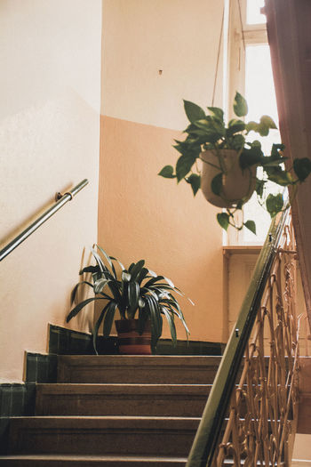 Potted plant on staircase by wall