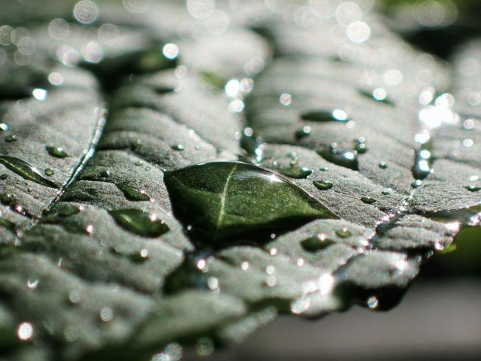 Close-Up Of Drops On Leaf During Rainy Season