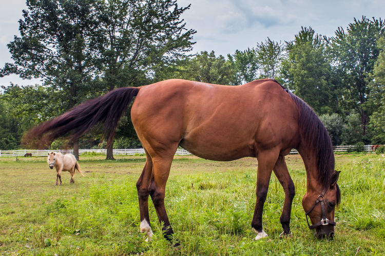 Horse grazing on field against trees