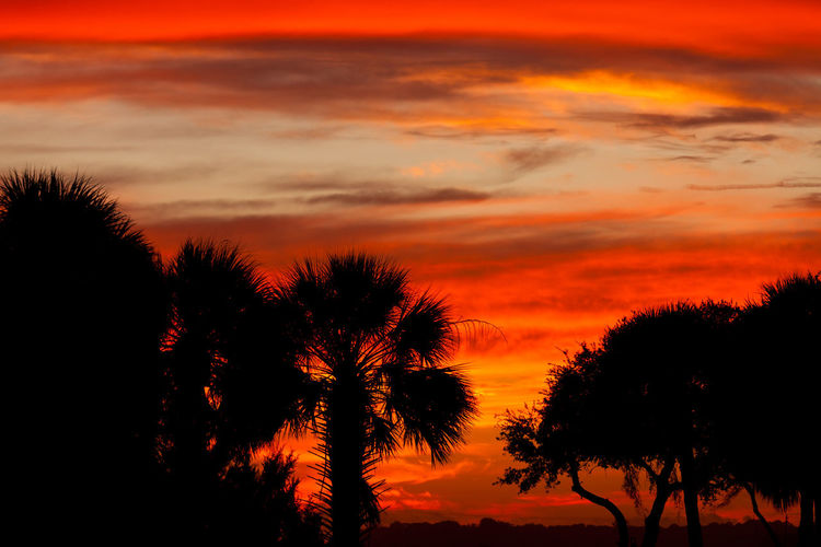 Southern sunset sky with palm and oak tree silhouettes, South Carolina, US Red Orange Color Sunset South Carolina South Carolina Sunsets Southern Oak Palm Tree Tree Sky USA Beauty In Nature Cloud - Sky Silhouette Scenics - Nature Plant Tranquility Tranquil Scene Nature No People Idyllic Growth Dramatic Sky Non-urban Scene Outdoors Romantic Sky