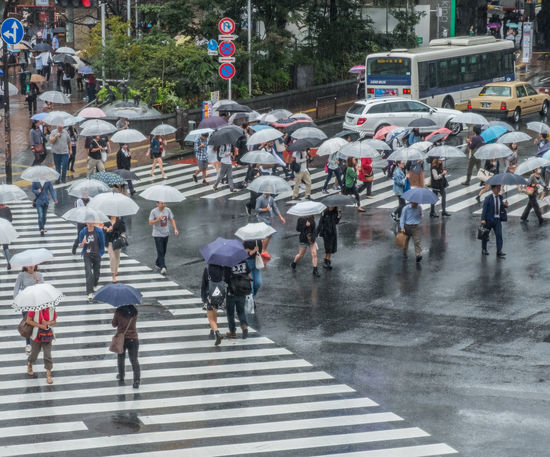 City City Life Crossing Japan Metropolitan People Rain Rainy Day Scrambled Shibuya Shibuya Crossing Street Tokyo Umbrella Walking Wet Zebra Crossing