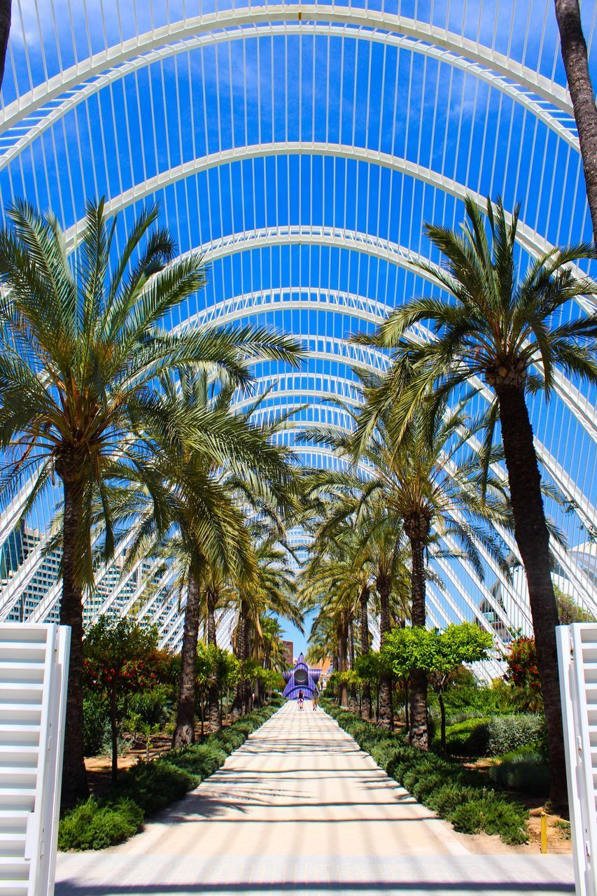 palm tree, tropical climate, tree, plant, nature, day, direction, architecture, the way forward, outdoors, footpath, diminishing perspective, no people, palm leaf, built structure, leaf, date palm tree, building exterior, vanishing point, travel destinations, tropical tree, treelined