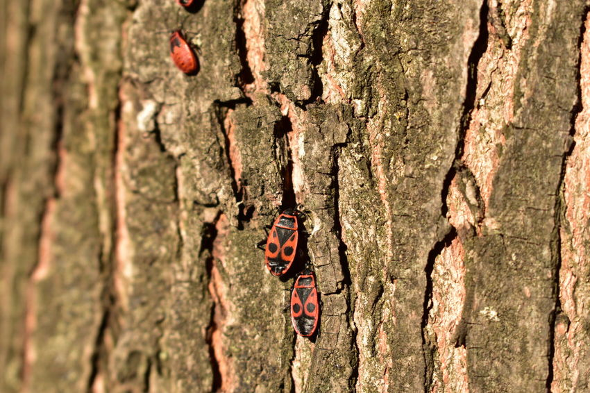 Tree Trunk Tree Rough Textured  Day Outdoors Bark No People Woodpecker Close-up Animals In The Wild Nature Full Frame Sunlight Animal Wildlife Animal Themes Growth Red Bugs