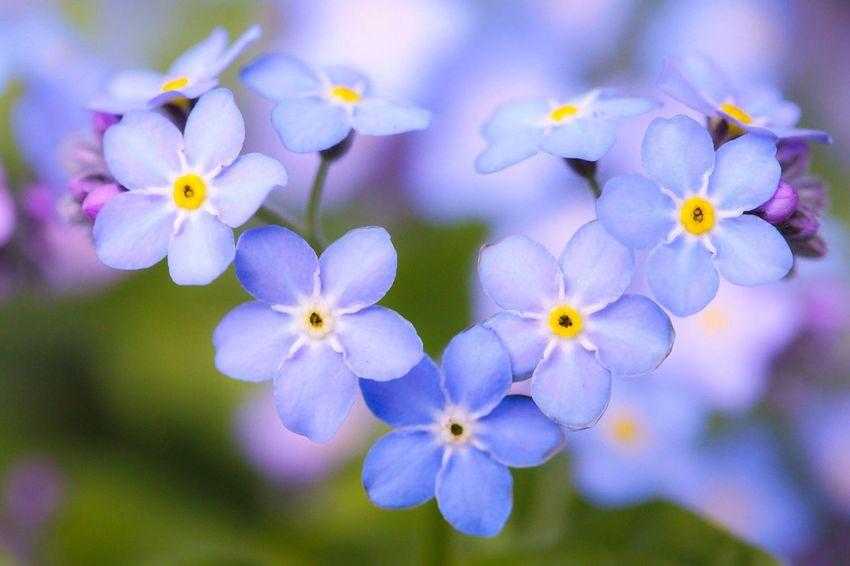 おはようございます♡♡ Flowerporn EyeEm Nature Lover Macro_collection Love