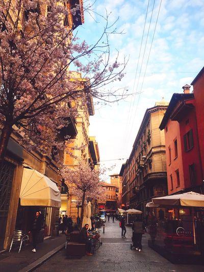 Italy Bologna Enjoying Life