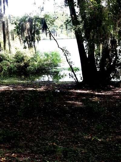 Raw Water Lakes  Relaxing Taking Photos Serinity Trees Outdoors