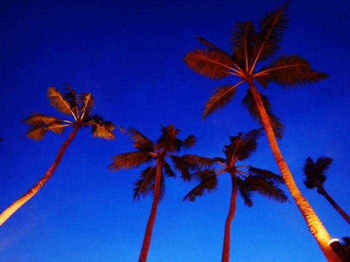Palau Palau Pacific Resort ヤシの木