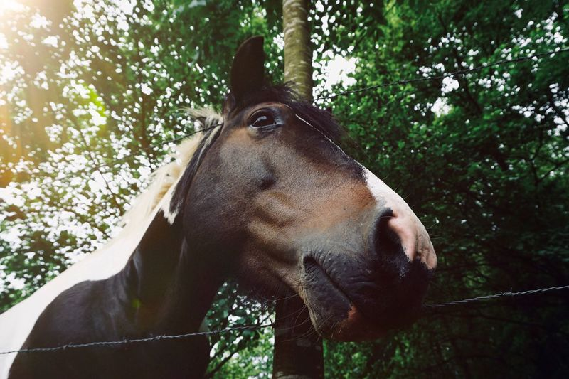 brown horse portrait in the farm in the nature Horizon Over Water Brown Horse Animal Animal Themes Animals In The Wild Nature Animal Eye Eyes Ears Hair Mammal Domestic Animals Domestic One Animal Animal Wildlife Pets Vertebrate No People Herbivorous
