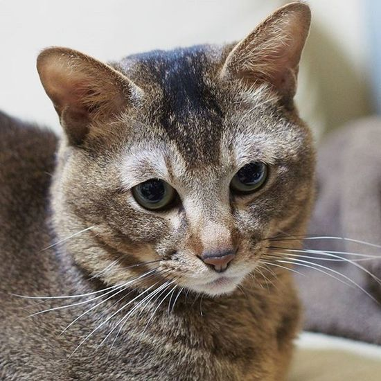 Cats 猫 にゃんすたぐらむ Catlover にゃんこ Cat Ilovecats Ilovemycat Catgram