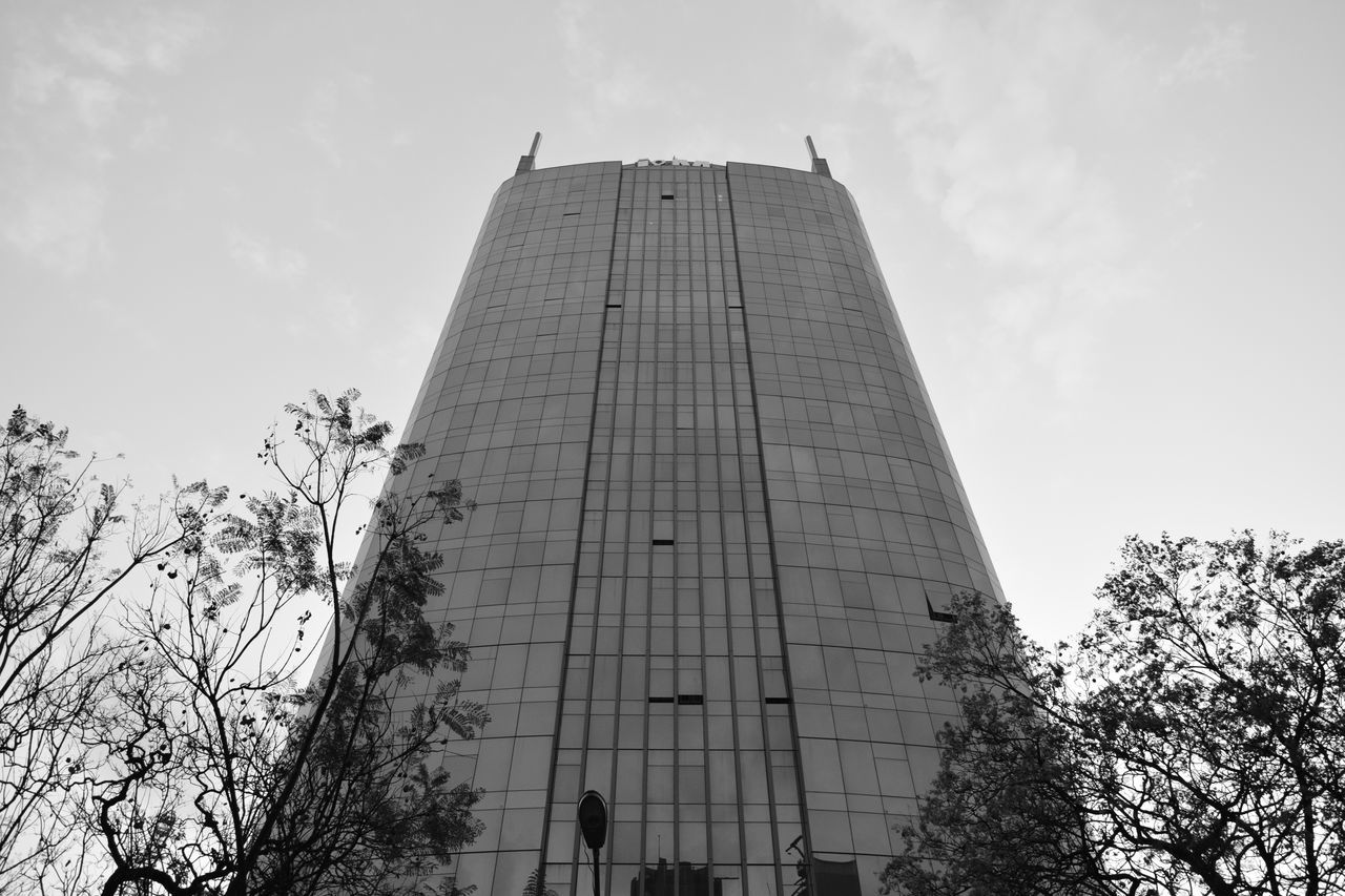 architecture, low angle view, built structure, tree, sky, day, modern, building exterior, outdoors, growth, skyscraper, city, no people