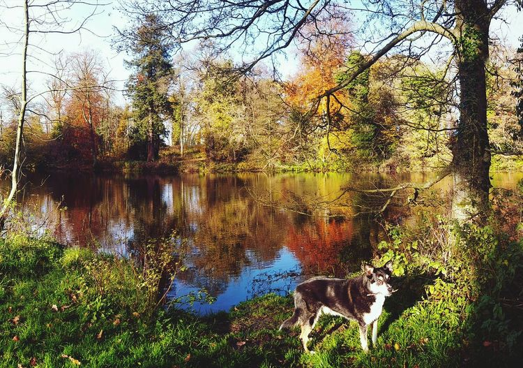 🐶 by Autumn Lake 🍁 Dogs Oxfordshire Autumn colors England, UK Nature Lake Reflection Tree Trees Sunshine Multicoloured