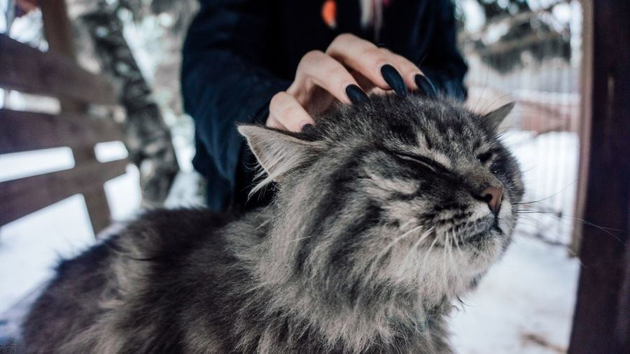 Cat EyeEm Selects Pets One Animal Animal Themes Domestic Animals Domestic Cat Focus On Foreground Real People Human Hand Persian Cat  Day Close-up