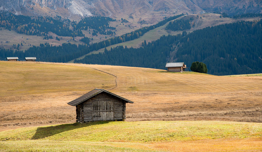 Landscape with  meadow field and wooden cabins at the alpe di siusi at the dolomite  in italy