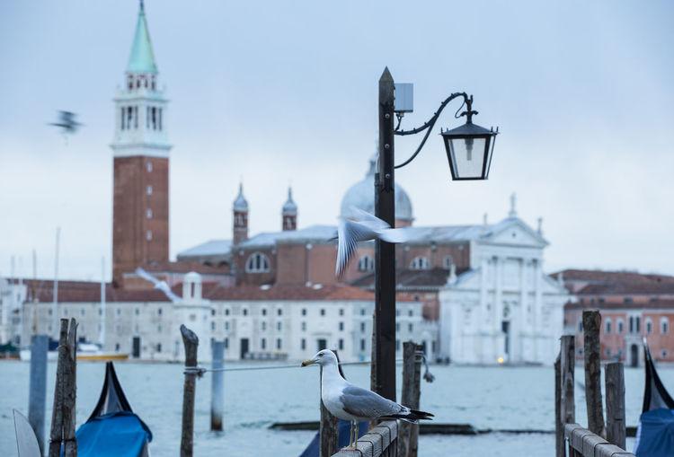 Seagulls by grand canal against church of san giorgio maggiore