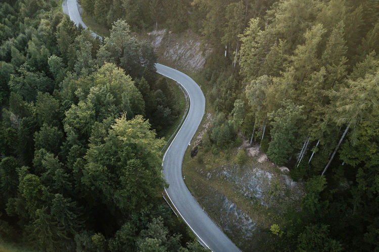 Tree Plant Road Curve Growth Transportation Forest No People Winding Road Scenics - Nature Beauty In Nature Nature Non-urban Scene Green Color High Angle View Mountain Land Mountain Road Day Foliage