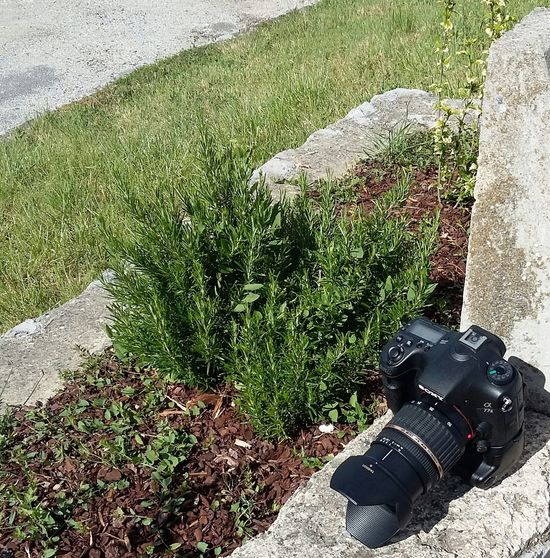 He was making a film with his mobile. Camera Props Garden Taking Photos Ardeche France Stone EyeEm Foto Showcase June