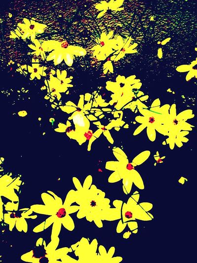 Playing with Wildflowers .