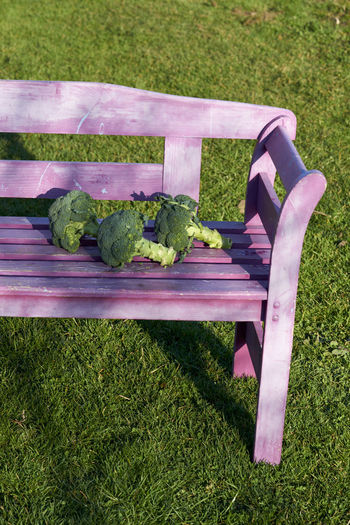 Absence Bench Chair Day Field Food And Drink Front Or Back Yard Gardening Grass Green Color Growth High Angle View Land Lawn Nature No People Outdoors Park Bench Plant Purple Relaxation Seat Vegetable