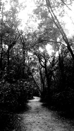 WoodLand Path Fairytales & Dreams Lightattheendofthetunnel Ancient Trees Toscana ITALY Calaviolina Singingtrees