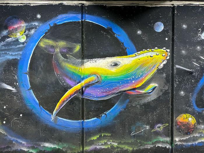 Multi colored fish swimming in water