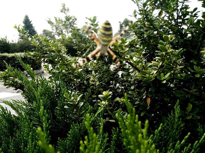 Spider Day Tree Outdoors Nature Sky Insect_perfection Insetto Insect Photo One Animal Animal Wildlife Nature No People Science Freshness Green Color Biellese. Animal Themes Insect Photography