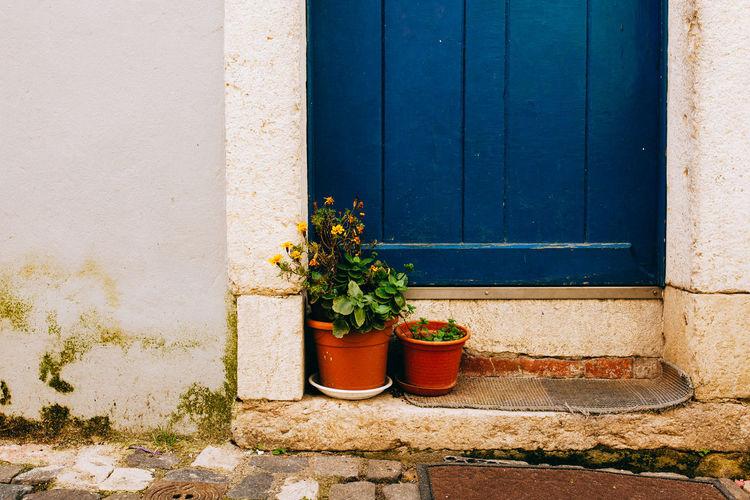 Potted Plants At Doorway