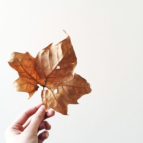 Cropped image of hand holding leaf over white background
