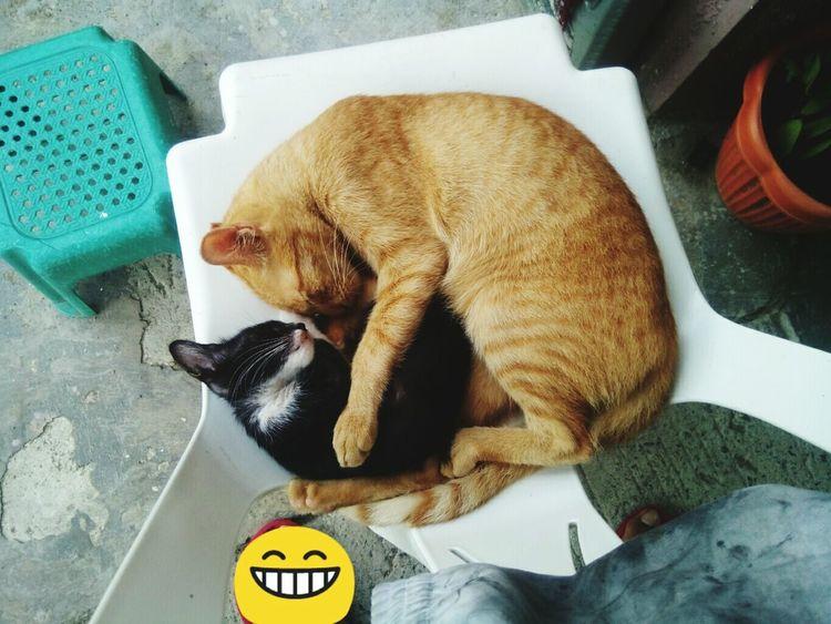 43 Golden Moments Cat♡ Garfield Mobilephotography Kitten