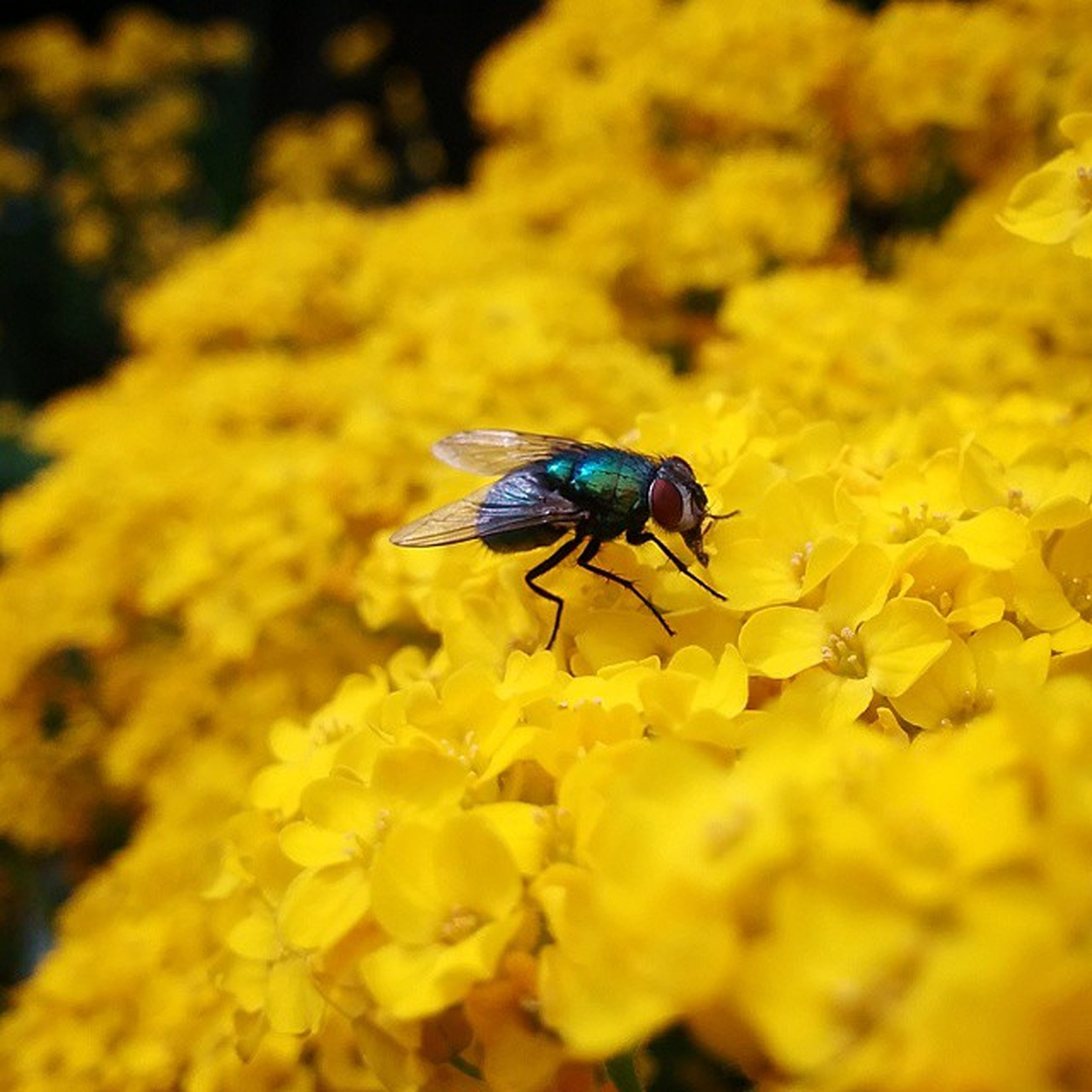 insect, one animal, yellow, animal themes, flower, animals in the wild, wildlife, bee, petal, pollination, fragility, freshness, beauty in nature, nature, close-up, focus on foreground, selective focus, growth, honey bee, symbiotic relationship