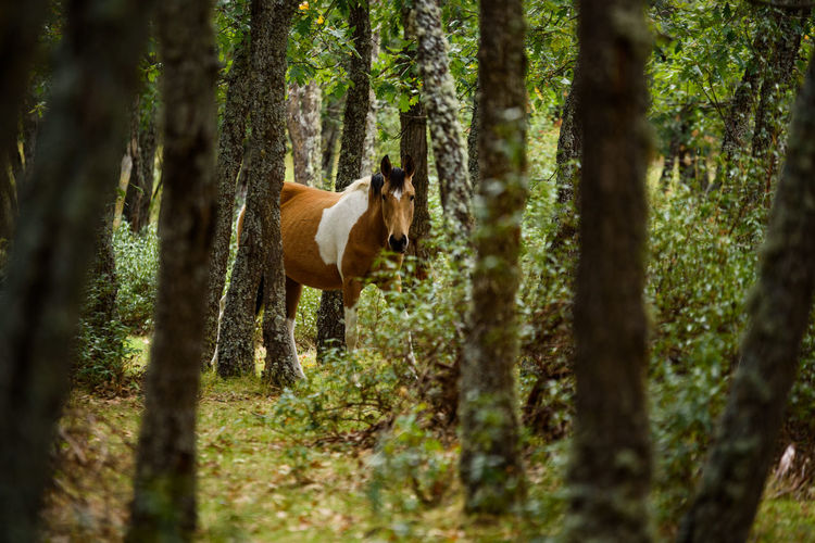 View of a horse in the forest