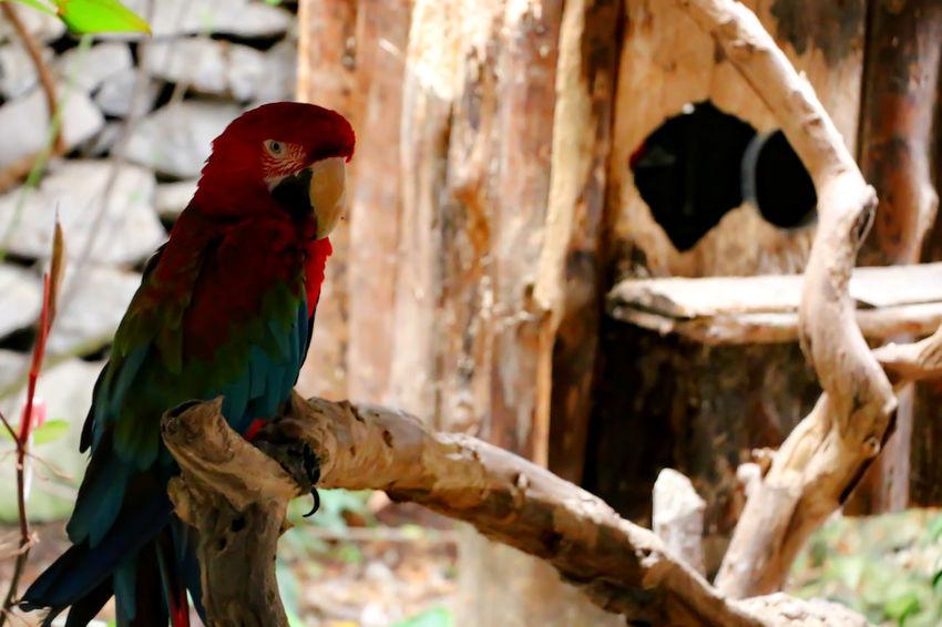 Animals Animal Themes Animal Photography Animal_collection Animal Love Animallovers EyeEm Animal Lover Parrot Parrot Lover Parrot Love Parrots Bird Photography Birds Birds🐦⛅ Birds_collection Cool Bird Animal Animals