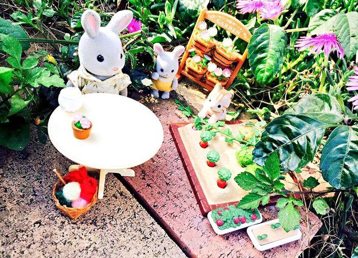 Enjoying Life Happy Beautiful Cute Enjoy Miniature Myhobby Nature 😎💕