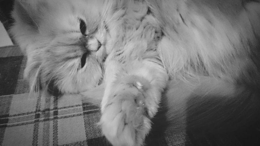 Cat Love Sleep 😚