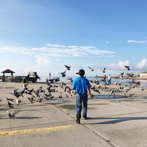 Rear view of man walking amidst pigeons on footpath