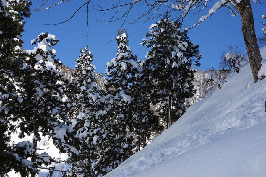 Snow Winter Cold Temperature Tree Nature Beauty In Nature Outdoors Day Tranquility Low Angle View Scenics Tranquil Scene Clear Sky No People Mountain Sky Forest Travel Destinations Christmas Tree Freshness Geology Jigokudani-Snow-Monkey-Park 地獄谷野猿公苑 Christmas Environment