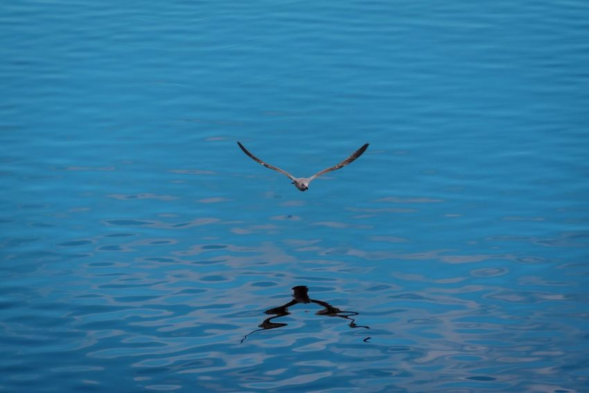 Water Nature Waterfront Flying Rivertyne Animals In The Wild Sea Day Beauty In Nature Outdoors No People Spread Wings Animal Themes Bird Nikonphotography Nikon Newcastle Northeast Eyem EyeEm Gallery EyeEm Best Shots Riverside Quayside Flight Reflection
