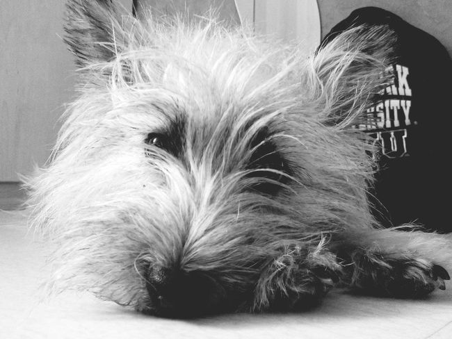 My Dog Black&white Cut Pets I Love My Dog
