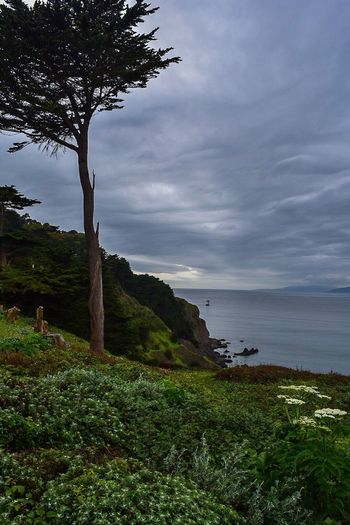 Nature Tree Scenics Landscape Tranquility Outdoors Water No People Day Rainy Days Lands End Trail San Francisco