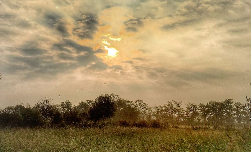 Cloud - Sky Sky Tree Plant Nature Beauty In Nature Sunset Tranquility No People Scenics - Nature Tranquil Scene Growth Sunlight Sun Land Outdoors Field Environment