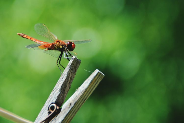 Insect Animals In The Wild No People Photography Photographer Vscocam The Great Outdoors - 2017 EyeEm Awards Beauty In Nature
