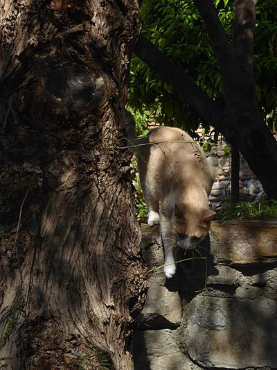 Kat Animal Animal Themes Animal Photography Shadows & Lights Nature Relaxing Taking Photos Feel The Journey 43 Golden Moments Things I Like Malaga Eye For Detail