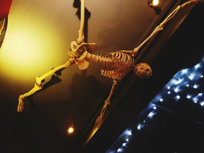 No People Indoors  Day Skelett Skeleton Bones Hanging Around Light Lights Skulls And Bones
