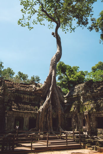 Siem Reap Cambodia Angkor Temple Ruins Place Of Worship Outdoors Blue Sky Tree Architecture Built Structure Building Exterior History Old Buildings Old Ruin Tall
