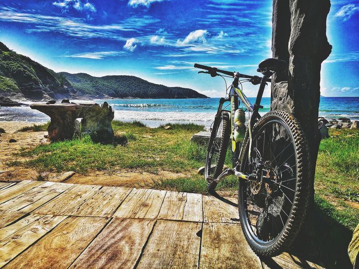 Minha companheira 🚴 Snapseed Bike Mountainbike Buzios Brasil Strava Roadbike Relivebrasil Nature Linda Huaweiphotography EyeEm Best Shots EyeEm Nature Lover Eyeem4photography Tadaa Community Tree Sunlight Calm Sandy Beach Ocean