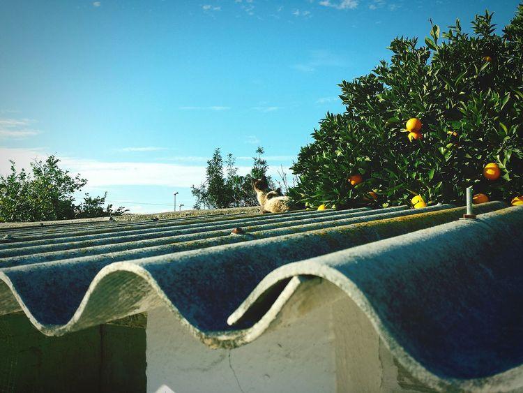 Cats Oranges Blue Sky Spanish Arquitecture Happynewyear Samsung Galaxy S4