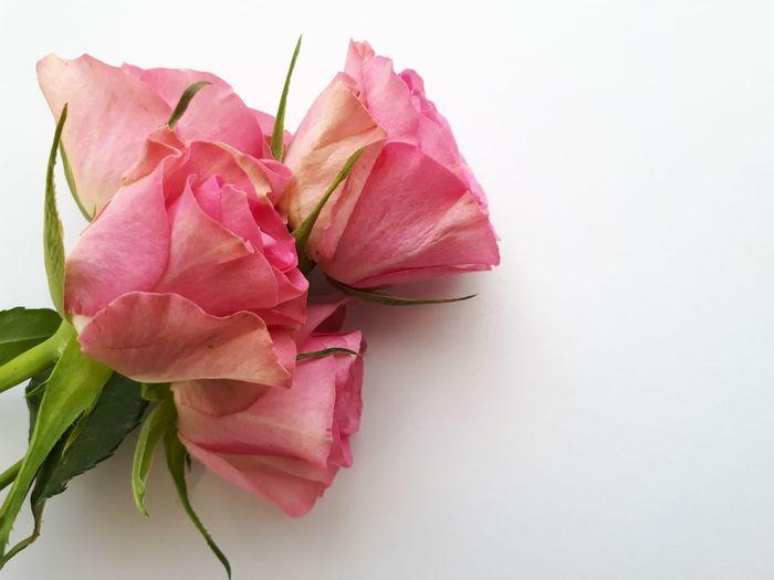 Rosen mit