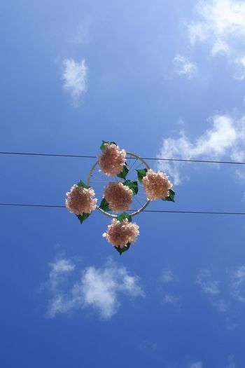 Bouquet Of Roses Bouquet Of Flowers Sky Cloud - Sky Nature No People Blue Plant Day