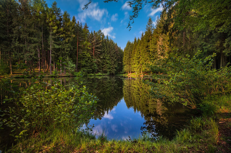 schönes Thüringen Thuringia Thuringian Forest Beauty In Nature Day Grass Growth Lake Nature No People Outdoors Reflection Scenics Sky Standing Water Symmetry Thuringian Nature Tranquil Scene Tranquility Tree Water Waterfront