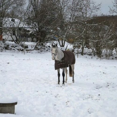 Min söta banan My Min Banan Häst ? Hästar Finns Inte ? Hästarfinnsinte ? Snö  Snow Brunt Skål Täcke Love You So Much <3